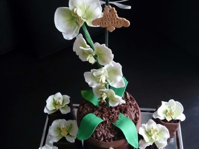 Orkide pasta